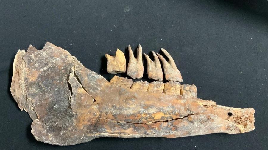 Entre os fósseis achados está pedaço de mandíbula e quatro dentes - Governo da cidade de Las Vegas/Divulgação