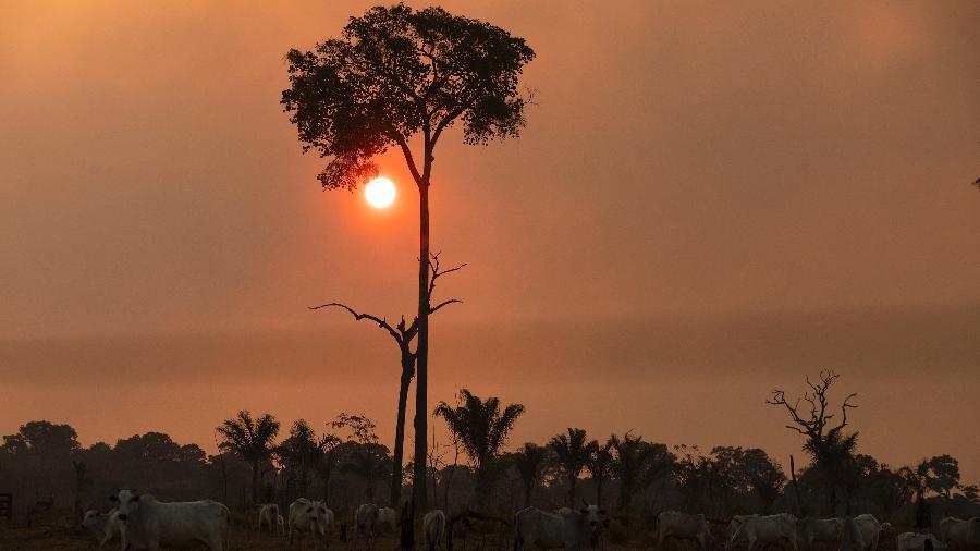 13 ago. 2021 - Gado pasta em meio ao céu coberto com fumaça de queimadas na Amazônia, em Novo Progresso, no sul do Pará - Ernesto Carriço/NurPhoto via Getty Images