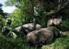 """Contra a extinção, fotógrafo expõe """"bastidores"""" da caça de rinocerontes - Érico Hiller/ Divulgação"""