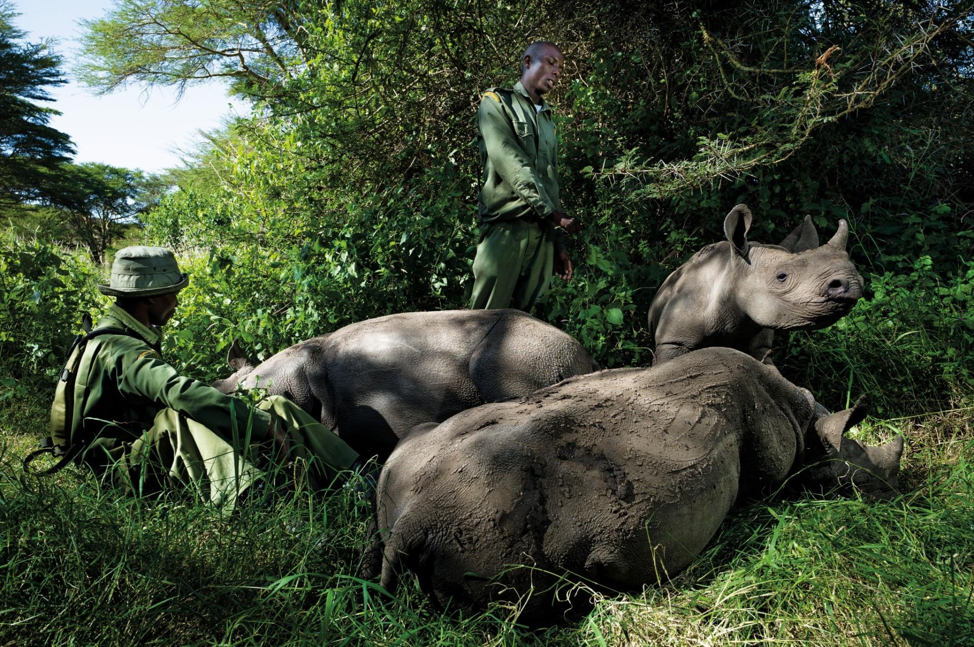 24.mar.2016 - Guardas florestais cuidam de rinocerontes órfãos no Quênia. A imagem foi tirada por Érico Hiller, fotógrafo documental brasileiro que viajou por dois anos para países como Índia, Vietnã, Zimbábue, Moçambique, África do Sul e Quênia para registrar o drama da caça de rinocerontes e do comércio ilegal de seus chifres