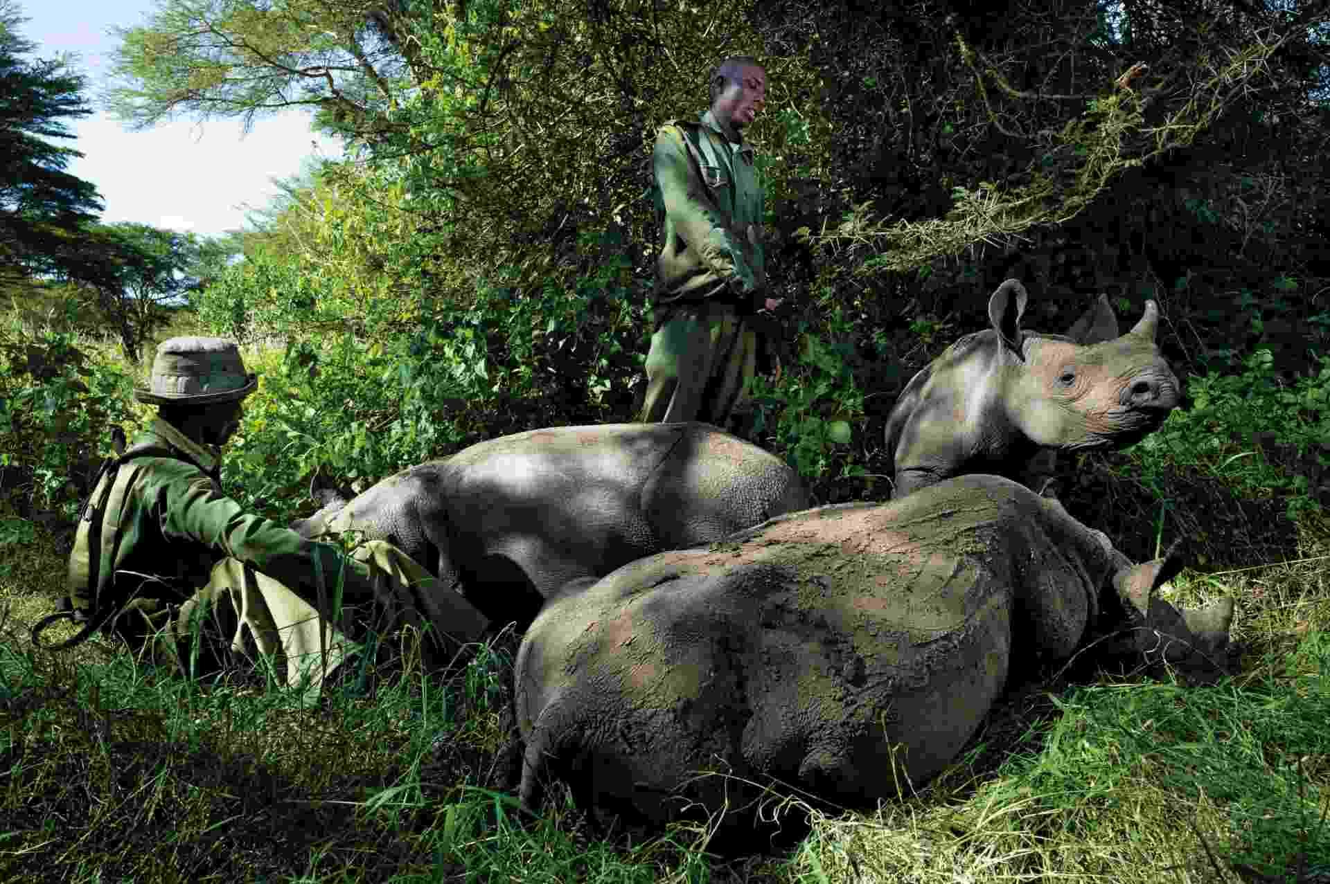24.mar.2016 - Guardas florestais cuidam de rinocerontes órfãos no Quênia. A imagem foi tirada por Érico Hiller, fotógrafo documental brasileiro que viajou por dois anos para países como Índia, Vietnã, Zimbábue, Moçambique, África do Sul e Quênia para registrar o drama da caça de rinocerontes e do comércio ilegal de seus chifres - Érico Hiller/ Divulgação