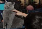 Você é amante de gatos? Evento reúne 320 felinos de 15 raças em SP - Silvia Pratta/PremieR pet