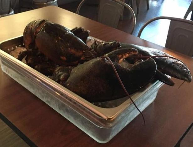 Larry é uma lagosta de 110 anos que quase virou jantar na Flórida (EUA)