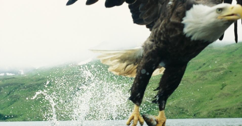 Uma águia americana pesca um peixe nas Ilhas Aleutas, no Alasca. A águia, símbolo dos EUA, é um pássaro pescador que pode ser encontrado por toda a América do Norte