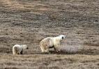 Planeta se reúne para discutir crise da biodiversidade (Foto: Dvorjchenko Vitaliy/The Siberian Times)