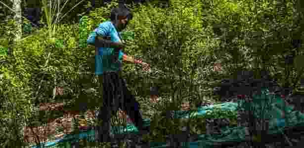 23.jun.2017 - Campo Elías Chagua colhe folhas de coca em La Hormiga, na Colômbia - Juan Arredondo/The New York Times - Juan Arredondo/The New York Times