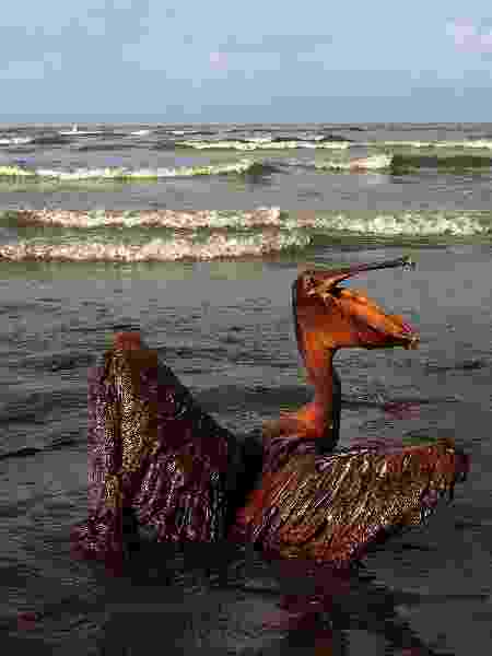 Pelicano coberto de óleo em praia de ilha na Louisiana (EUA) em 2010 - Win McNamee/Getty Images/AFP