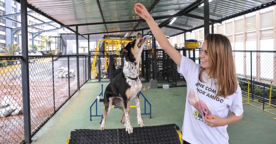 Academia SP/UP espaço de recreação para cachorros