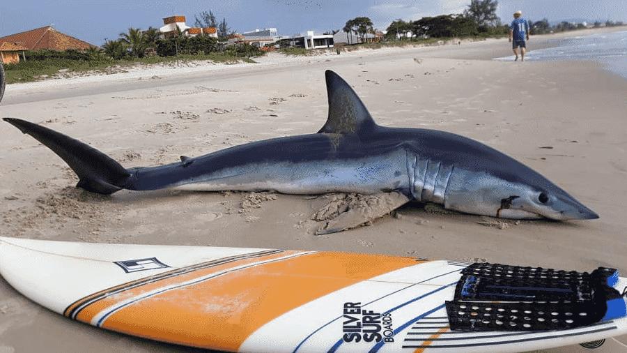 Tubarão foi achado por pescadores após ficar encalhado em praia de Guaratuba, no Paraná - Reprodução/Rádio Guaratuba