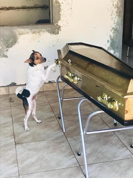 Cão ficou ao lado do caixão da dona e chorou durante o velório em Camaçari (BA) - Arquivo Pessoal/Jailson Almeida