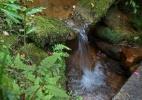 Clique Ciência: Por que e como se formam as nascentes de água? (Foto: Juca Varella/Folhapress)