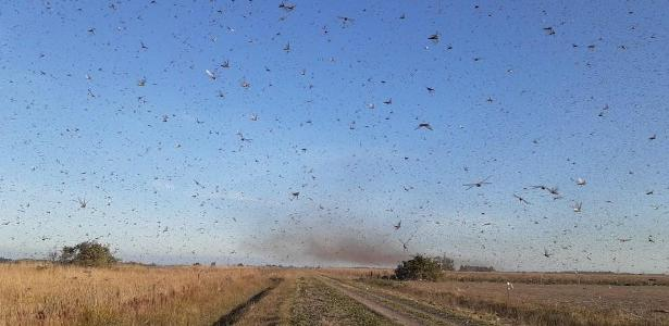 Monitorada desde maio | Argentina faz alerta na fronteira com RS por nuvem de gafanhotos