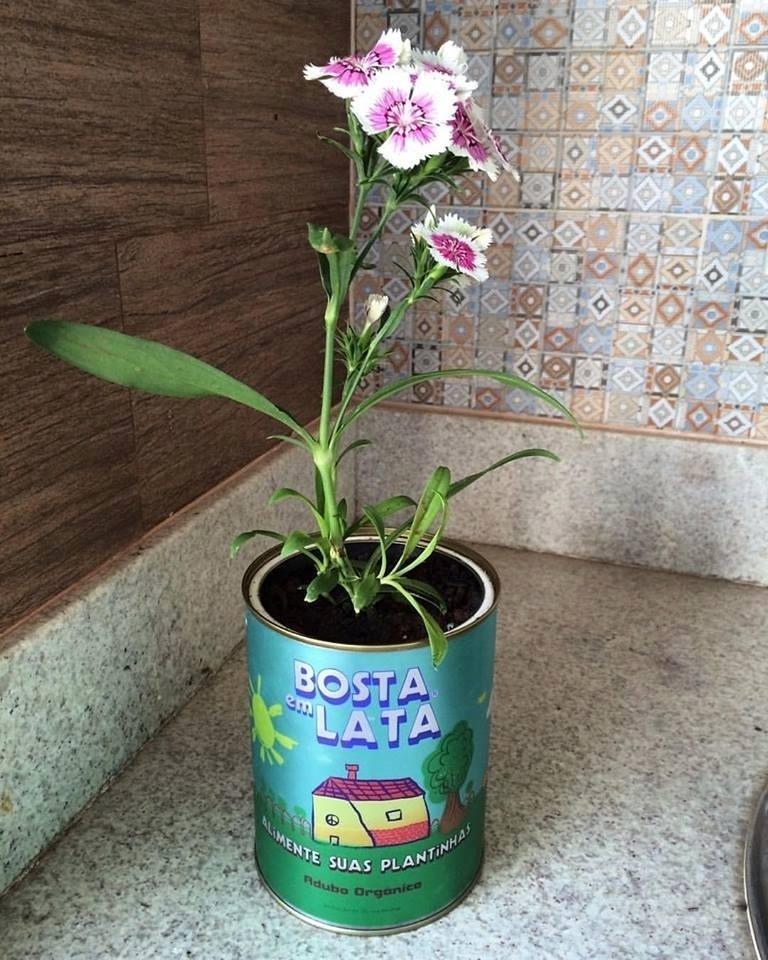 Bosta em Lata, empresa de adubo orgânico