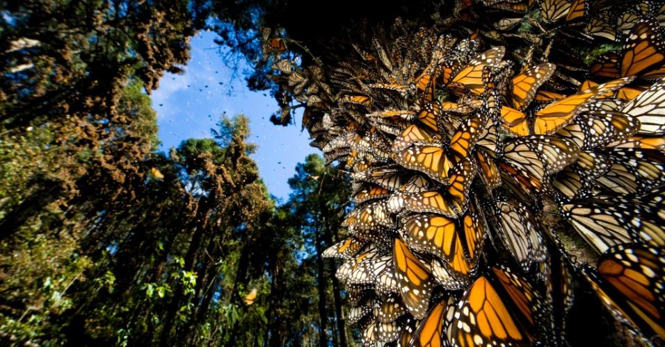 27.jul.2016 - Todos os anos, as florestas mexicanas são tingidas de laranja durante a migração para o sul de milhões de borboletas monarca