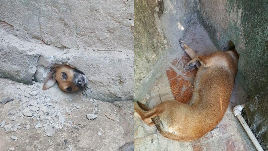 Cão ficou preso em muro e foi resgatado pelos Bombeiros - Divulgação/Corpo de Bombeiros