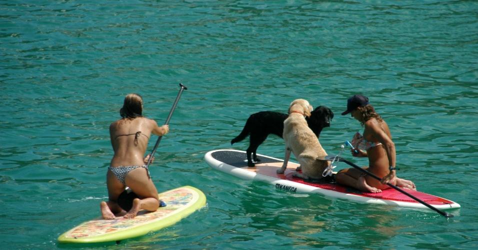 28.fev.2016 - Até os cachorros aproveitaram o calor do Rio de Janeiro para entrar no mar na praia do Arpoador