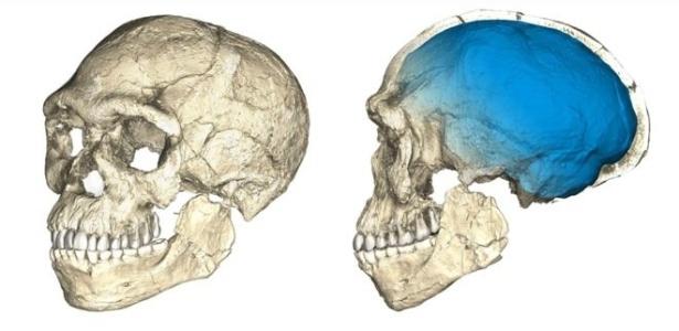 Reconstrução do primeiro crânio de Homo sapiens, feito com base em ressonâncias de múltiplos fósseis originais
