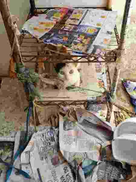 Gato preso pelo pescoço em meio a sujeira e entulhos em uma casa de Natal; ele e outros animais foram resgatados - Divulgação