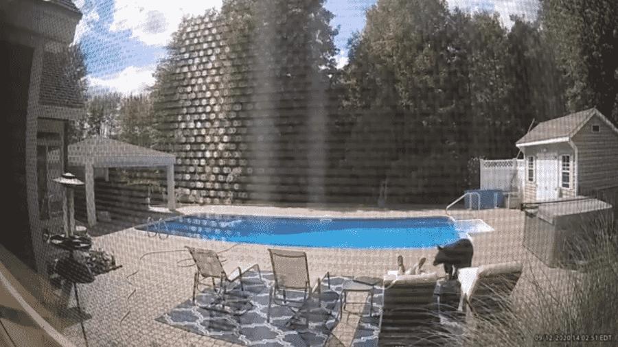 Urso perdido invade casa nos Estados Unidos e acorda homem que dormia à beira da piscina - Reprodução/TMZ