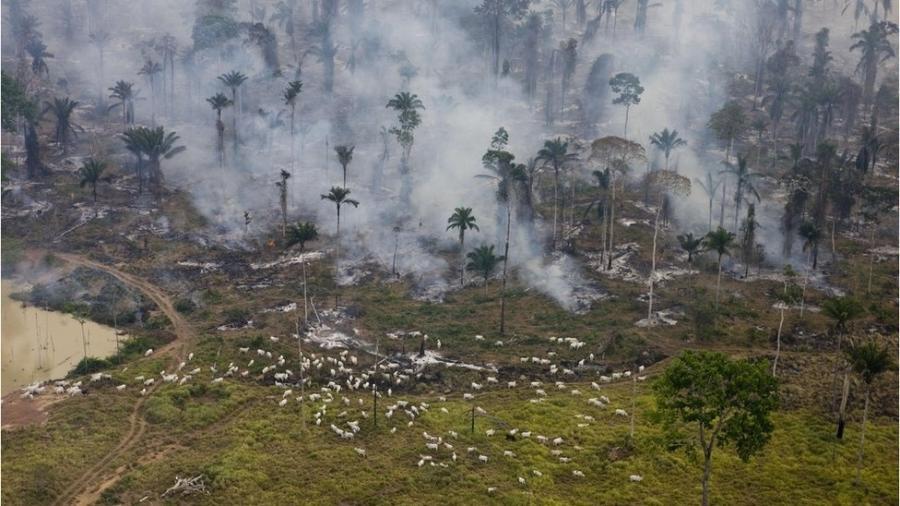 O PL 510/2021, caso seja aprovado pelo Senado brasileiro na forma como está, possibilitará que terras públicas desmatadas ilegalmente se tornem propriedade de quem as ocupou - Greenpeace Photo/Daniel Beltra