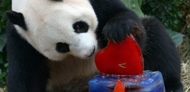 A panda gigante Jia Jia tinha 38 anos
