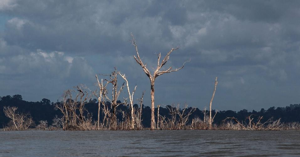 Eles tinham uma ilha, agora passam fome: Como um povo da floresta amazônica foi convertido em pobre na cidade mais violenta do Brasil