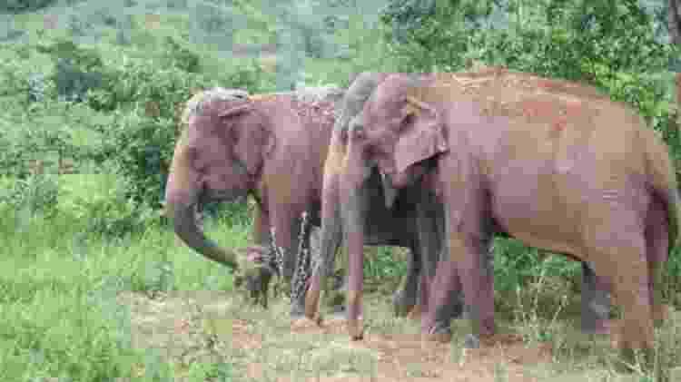 Em dezembro do ano passado, a dupla recebeu a companhia da elefanta asiática Rana (no meio) - Patrícia Santos