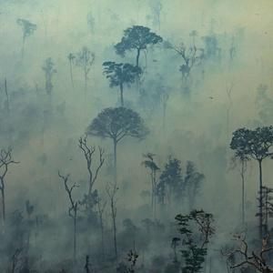 Victor Moriyama/GREENPEACE/AFP