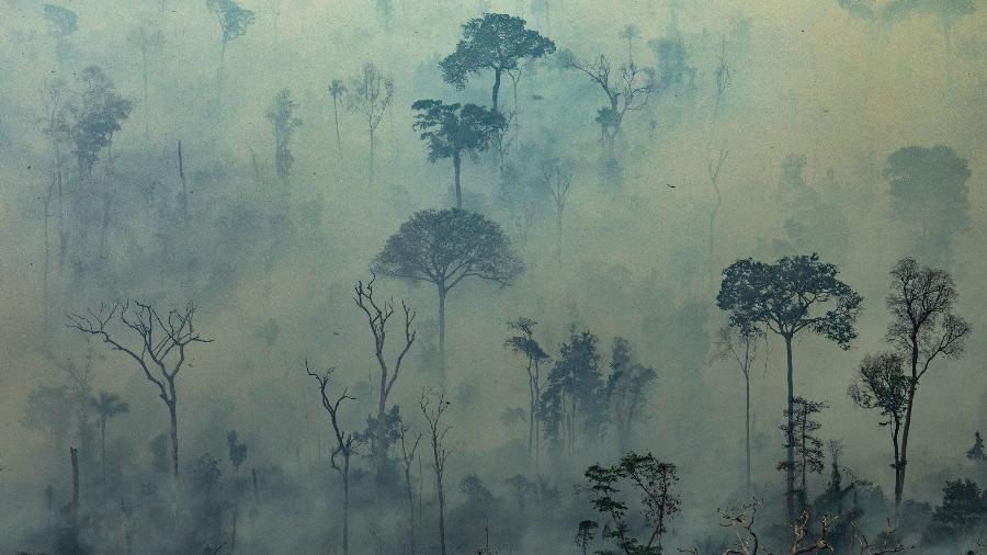 Floresta incendiada no município de Altamira, no interior do Pará - Victor Moriyama/GREENPEACE/AFP