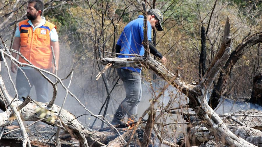 nov.2019 - Brigadistas observam área atingida por incêndio em Alter do Chão, em 2019 - Jader Paes/Ag.Pará