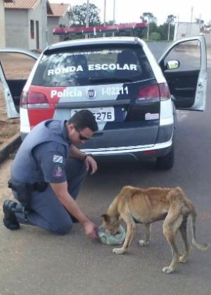 PM Lauro Miller alimenta um cachorro abandonado em rua de Penápolis (SP) - Reprodução/Facebook