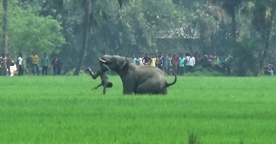 21.mar.2016 - Um elefante atacou um indiano em um campo na vila Baghasole, em Bengala, na Índia. Cinco pessoas morreram em ataques de elefantes selvagens que invadem aldeias no leste da Índia. A foto é deste domingo (20), mas foi divulgada nesta segunda-feira