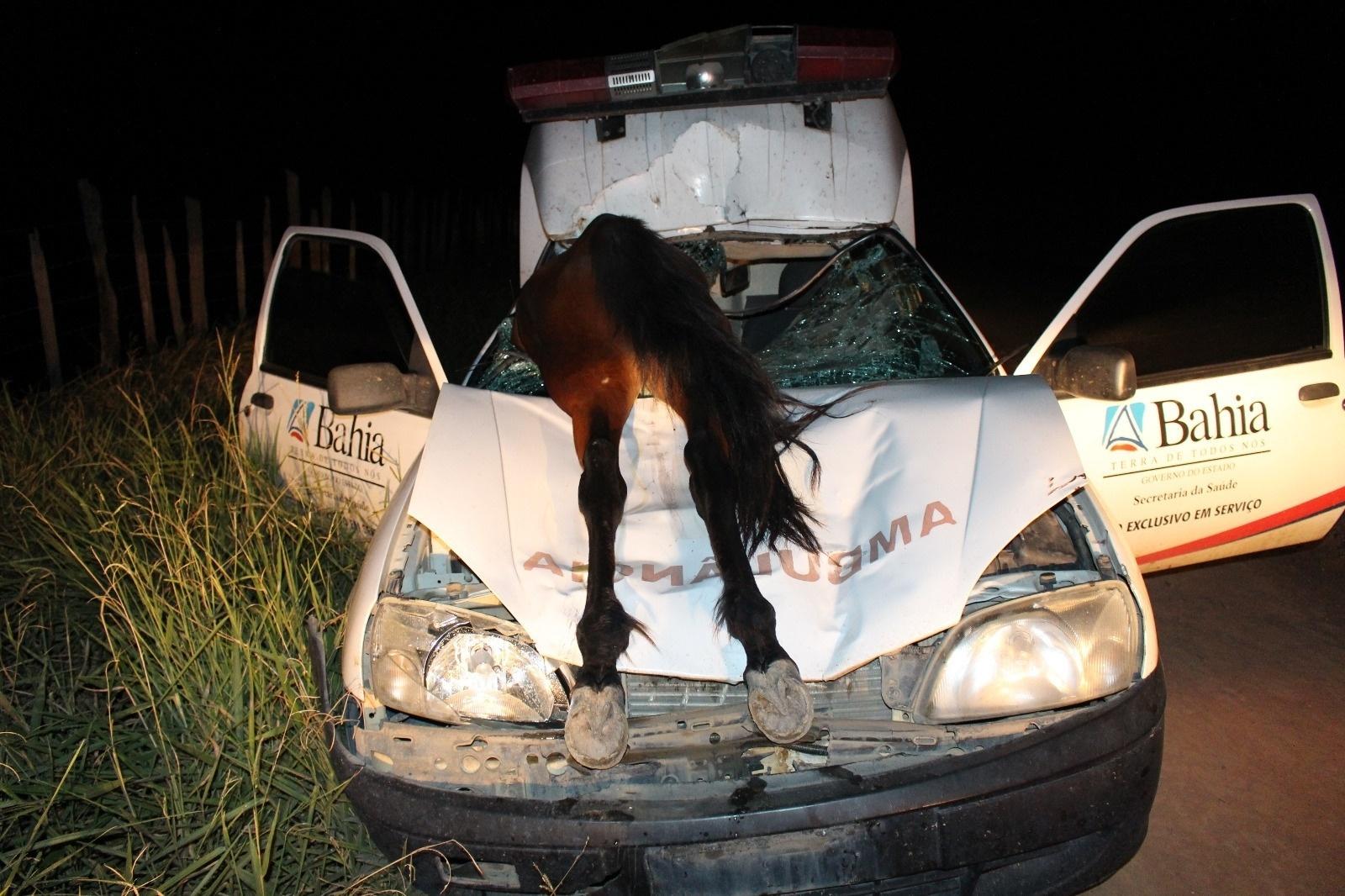 3.mai.2016 - Uma ambulância colidiu com um cavalo em um acidente na BA-290, em Medeiros Neto, na Bahia. O animal, que morreu no acidente, acabou entrando pelo para-brisa do veículo e ficou apenas com as patas traseiras para fora. O condutor do carro sobreviveu e sofreu apenas escoriações leves. Ele afirma que estava em baixa velocidade e que o animal invadiu a pista