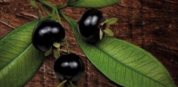 Grumixama é um dos alimentos em extinção no Sudeste