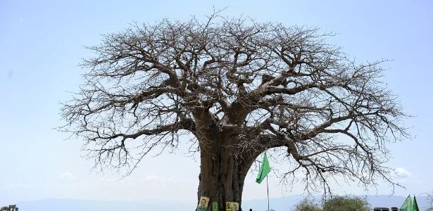 O povo Maasai se reúne sob um baobá em Oltukai, na Tanzânia - AFP/TONY KARUMBA