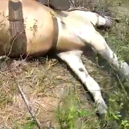 Dois vaqueiros e dois cavalos são encontrados mortos em fazenda no Pará - Reprodução/Redes sociais