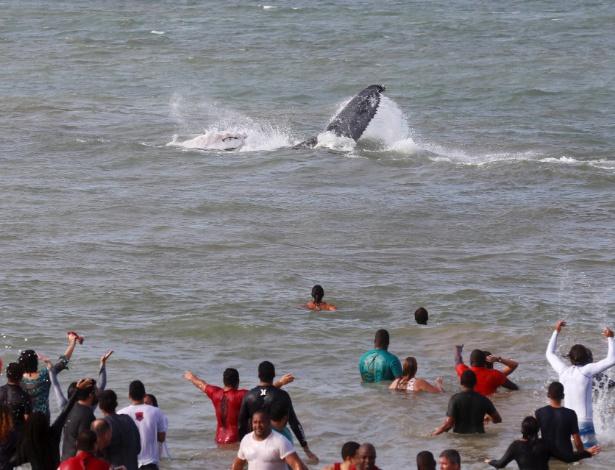 Após ajuda de moradores locais em resgate, baleia jubarte que estava encalhada em praia volta ao mar - Pablo Jacob/Agência O Globo