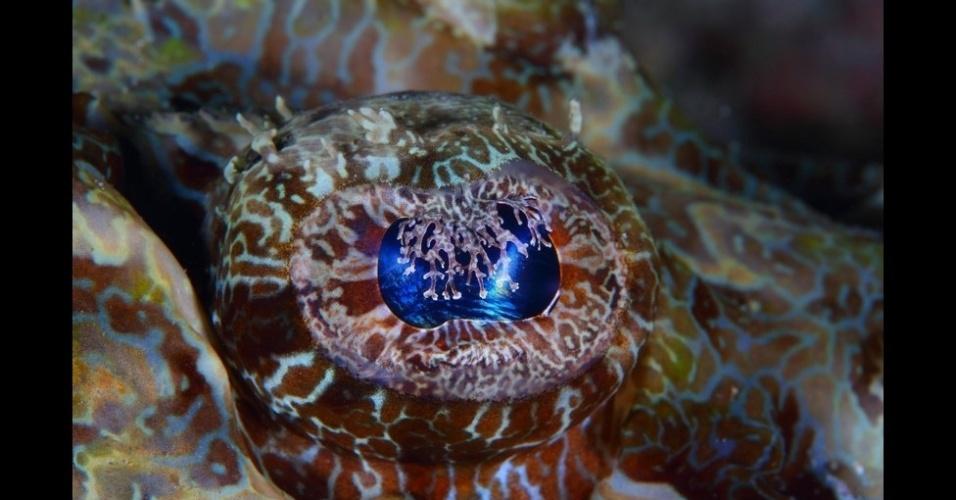 """5.fev.2016 - Bin Thalith encontrou esse peixe-crocodilo próximo ao fundo do mar, onde ele se camufla, nos arredores da ilha de Mabul, na Malásia, e registrou seu olhar marcante. O livro do fotógrafo, """"Truly, Madly, Deeply"""" (""""Verdadeiramente, loucamente, profundamente"""", em tradução literal), foi lançado neste mês"""