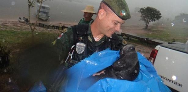 O filhote estava perdido da mãe no lago Mamori quando foi encontrado por moradores
