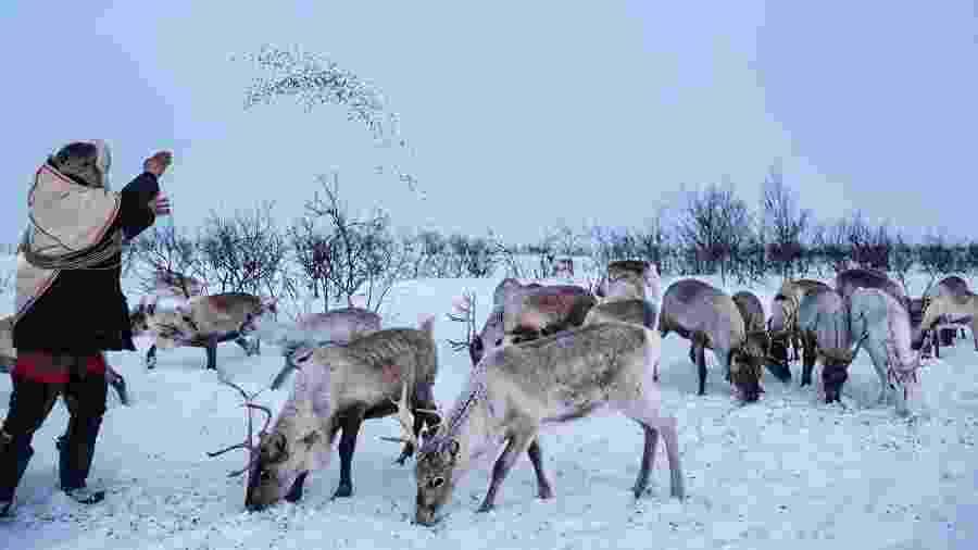 Jovsset Ante Sara alimenta suas renas em Kautokeino, na Noruega - Nadia Shira Cohen/The New York Times