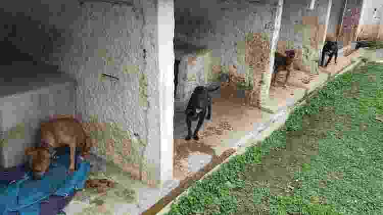 Cães em São José dos Pinhais - Polícia Civil/Divulgação - Polícia Civil/Divulgação