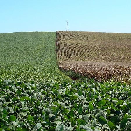 Áreas de cultivo de soja (à esquerda) e milho em Cruz Alta (RS) - Staff Photographer