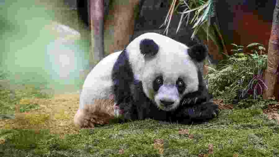 A idade de Xin Xing era equivalente a 130 anos humanos - Getty Images