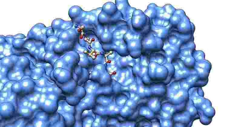 Protease MPro: enzima revela ponto fraco no processo de reprodução do coronavírus - Divulgação/CNPEM - Divulgação/CNPEM