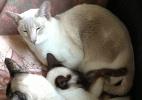 Reprodução/Grove Lodge Veterinary Group