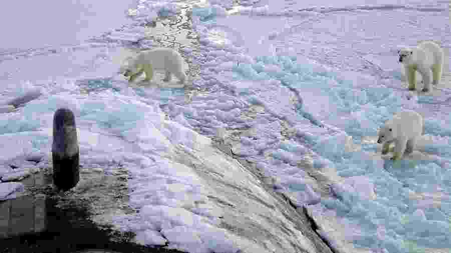 Ursos polares observam submarino norte-americano que emergiu no oceano Ártico a 450 quilômetros do Polo Norte - Alphonso Braggs/US Navy