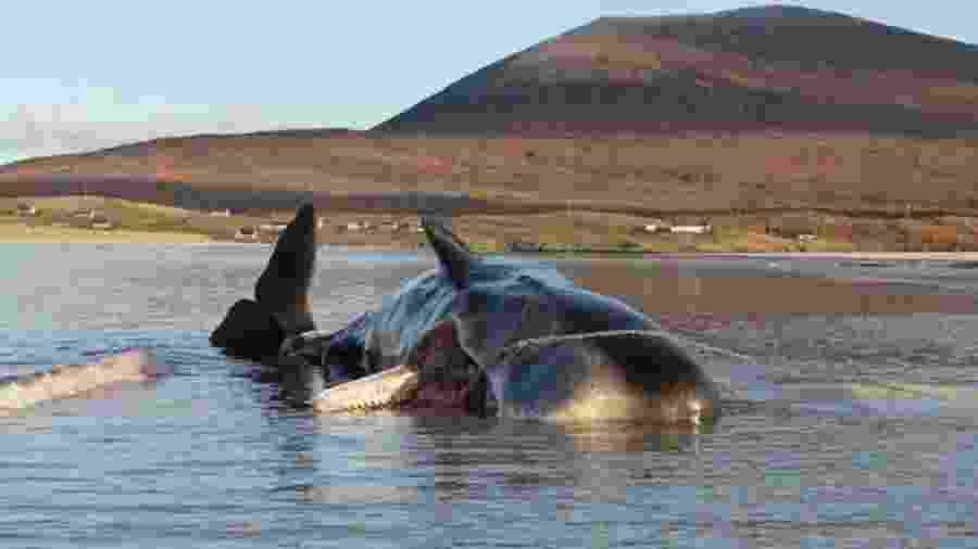 Redes de pesca e copos de plástico estavam entre os resíduos achados no estômago da baleia - Dan Parry