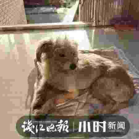 Dou Dou foi reencontrado na última quinta-feira (22) - Qianjiang Evening News
