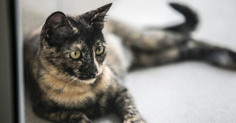A fêmea sem nome de cor rajada é uma das gatas que chegou prenha ao Centro de Controle de Zoonoses. Os filhotes já foram adotados e ela espera sua vez. Tem em torno de 2 anos, é muito dócil, gosta de colo e de outros animais