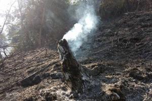 Incêndio já destruiu 600 hectares no Parque Nacional da Serra da Bocaina (Foto: Estadão Conteúdo)